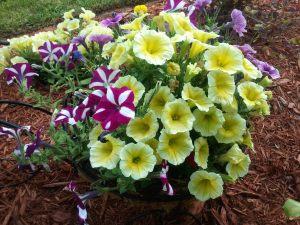 Robinsons Spring Garden 2012