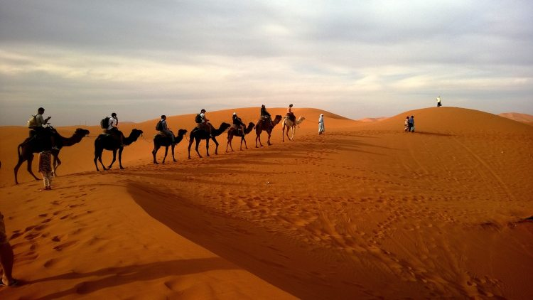 Desert and Camels